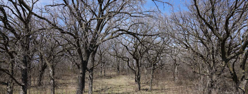 Wyndham Hills Detailed Lot images